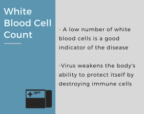 White Blood Cell Count(2)