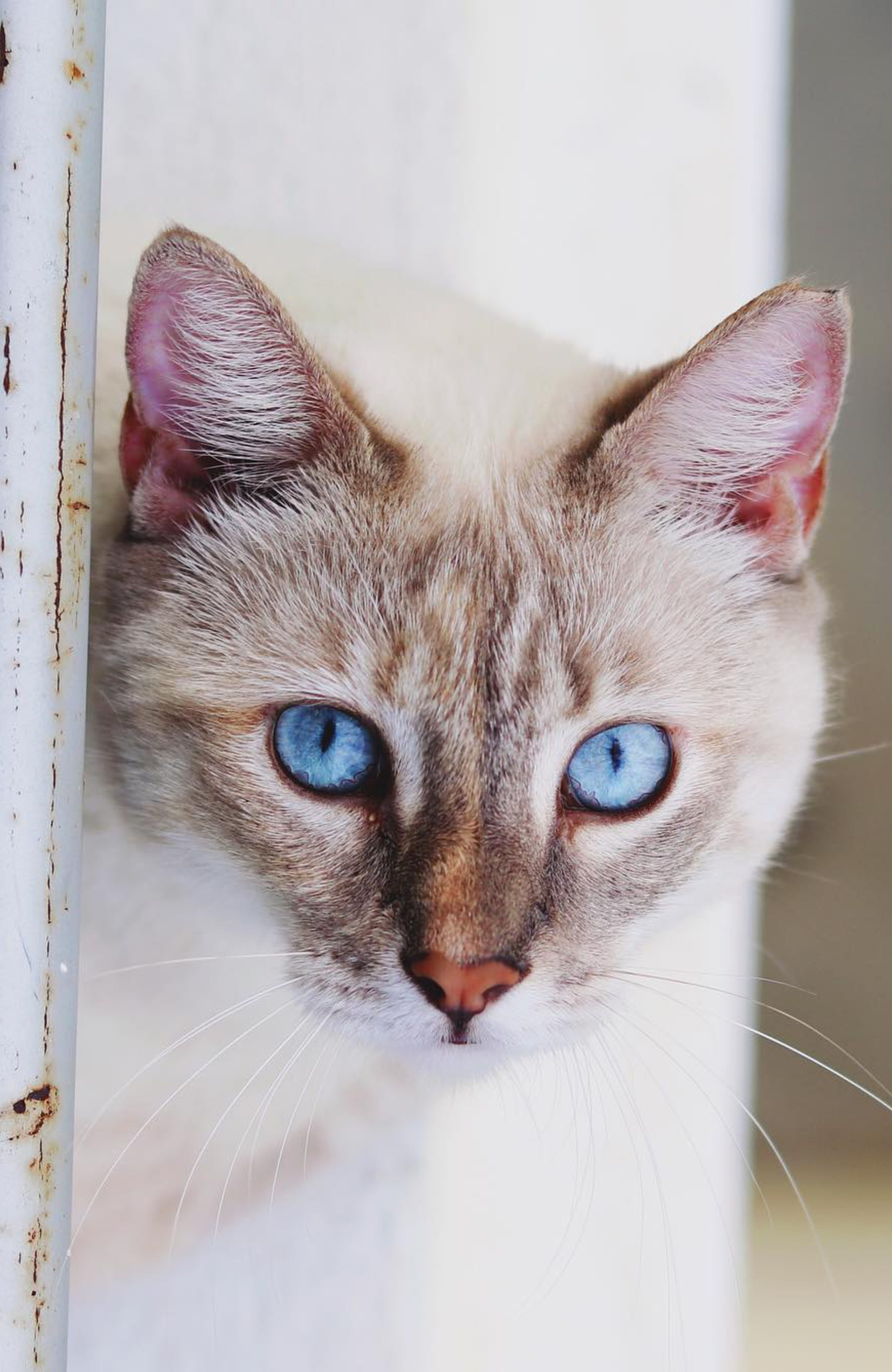 Should FIV-Positive Cats Get Euthanized?