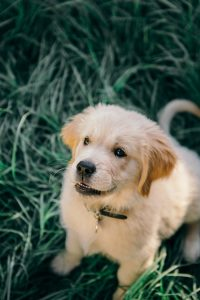 Does Your Dog Have Parvo or Campylobacter?