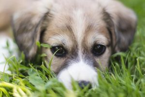 7 Places to Avoid Taking Your Unvaccinated Puppy