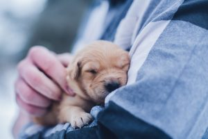 5 Daily Habits That Will Protect Your Puppy from Parvo