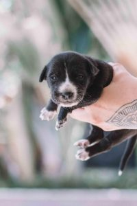 Why Do Puppies Need Multiple Parvo Shots?