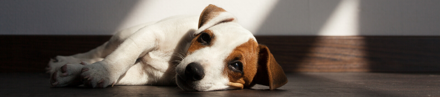 Is It Time to See the Vet? 5 Warning Signs of Parvo